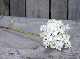 Uge 40 Fleur Hortencia H50 cm creme , hemmetshjarta.dk