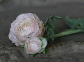 Fleur Ranunkel H40 cm creme , hemmetshjarta.dk