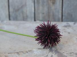 Fleur Dahlia H68 cm bordeaux , hemmetshjarta.dk