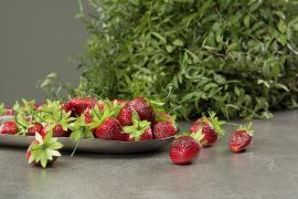 Kunstig jordbær 4 cm 10-pak , hemmetshjarta.dk