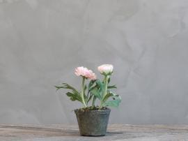 Fleur Ranunkel i Gammel keramik Krukkete H16 cm rosa , hemmetshjarta.dk