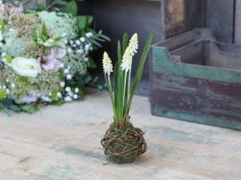 Fleur Perlehyacint løg H25 cm hvid , hemmetshjarta.dk