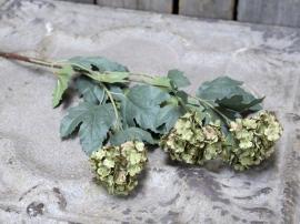 Uge 40 Fleur Duftsnebolle L78 cm støvet grøn , hemmetshjarta.dk