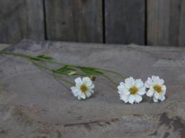 Fleur Grøftekantsblomst H57 cm hvid , hemmetshjarta.dk