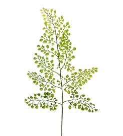 Kunstig Adiantum blad 60 cm , hemmetshjarta.dk