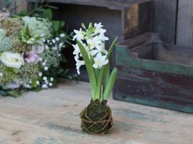 Fleur Hyacint udsprunget løg H24 cm hvid , hemmetshjarta.dk