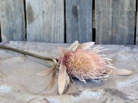 Fleur Protea Blomst H60 cm Gammel rosa , hemmetshjarta.dk