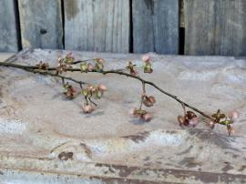 Fleur Gren m. frøkapsler H84 cm Gammel rosa , hemmetshjarta.dk