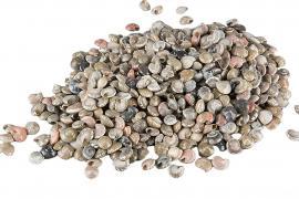 Seashell ca 1cm 2kg , hemmetshjarta.dk