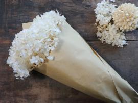 Fleur tørret Hortensia Blomst L60 cm creme , hemmetshjarta.dk
