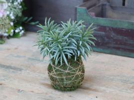 Fleur Plante m. moskugle H18 cm grøn , hemmetshjarta.dk