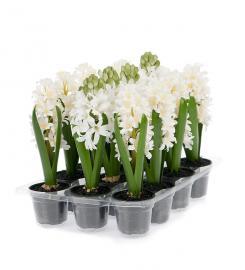 Kunstig Hyacint mix 23 cm 3-pack , hemmetshjarta.dk