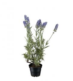 Kunstig Lavendel 45 cm , hemmetshjarta.dk
