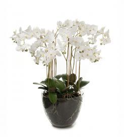 XX Kunstig Phalaenopsis Orkideer 90 cm , hemmetshjarta.dk