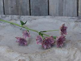 Fleur Tidsel H56 cm blomme , hemmetshjarta.dk