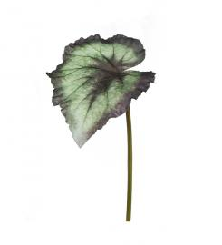 Kunstig Begonia Rex blad 20 cm , hemmetshjarta.dk