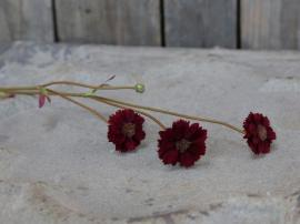 Fleur Grøftekantsblomst H57 cm vinrød , hemmetshjarta.dk