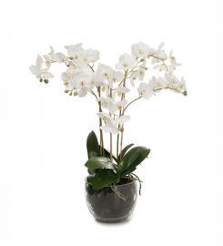XX Kunstig Phalaenopsis Orkideer 70 cm , hemmetshjarta.dk