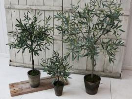Uge 42 Fleur Oliventræ i Gammel keramik Krukkete H52 cm grøn 1 st , hemmetshjarta.dk